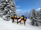 Morzine Penguins